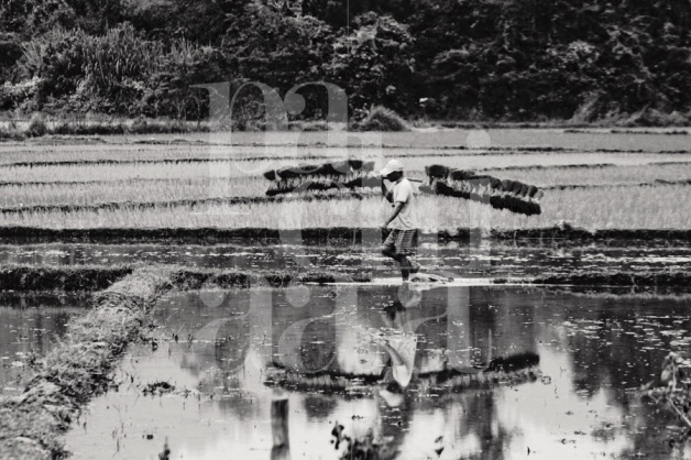 Laos Rice Fields - Black&White